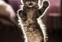 pisici comice