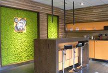 pareti e decorazioni con muschio e licheni stabilizzati