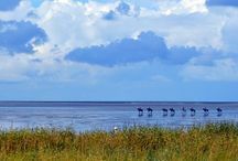 The Wadden Sea; Cuxhaven, Germany / The Wadden Sea, a UNESCO World Heritage Site, is the largest natural landscape of its kind in the world with two distinct personalities depending on the tide — mud flats or bathing beach.