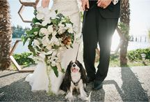 Dog Love: Meredith McKee Photography / I LOVE when my couples include their dogs in their sessions & weddings!!!