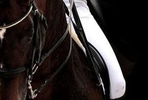 Horsey ❤️