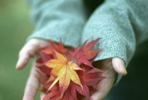 Autumn's Softer Side / The lovely muted shades of fall. / by ~ Terri ~