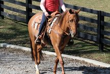 Horses: Exercises and Activities