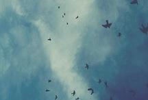 Le vivant / inspiration contemplation rêve dream
