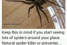 remedies for spiders