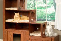 DIY for pets / Complementos DIY para tus mascotas!!