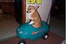 Omg cute animals!! / public