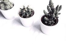 Plants B&W
