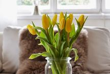 flowers / Cut flowers in the vase or glass bottles...