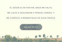 versículo diario!