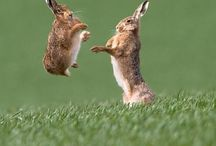 Bunnies... / ... / by Sandra Walling