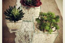 Plants\ Flowers