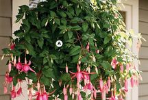 Tips for Hanging Baskets