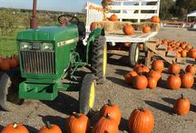 Abbey Farms Pumpkin Daze / Pin's and photos of our Pumpkin Daze Festival at Abbey Farms - Pumpkin's, Corn mazes, country fun and more!