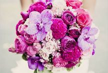 Magenta Pink Purple