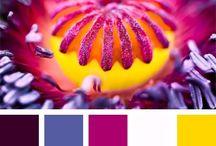 Палитры / вдохновение цветом, сочетания цветов
