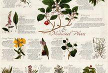 Herbs and veggies garden seeds