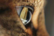 Ogen - Eyes