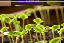 Garden Secrets -hydrogen proxide