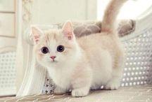 pisici / cats