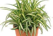 Plantas interior/ambiente fechado