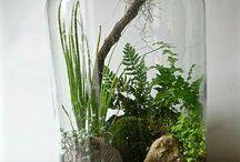 Rostliny v lahvi
