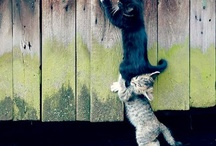 Animals too cute  / by Paige Giles