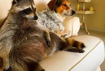 Curiosidades de animales