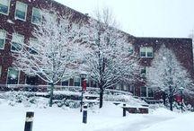Beautiful Photos of Molloy / Pretty photos around campus!