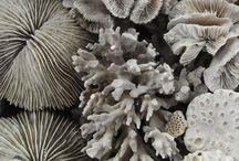 Coral // corals