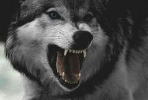 WOLF ⭐️.⭐️