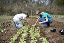 Artful Agriculture: Farm Communities - Ideas for DisAbility Populations - Inclusive / Exploring options for work & housing for individuals with disAbilities to meaningful contribute in inclusive farm settings.