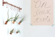 Plants / How to decorate with plants