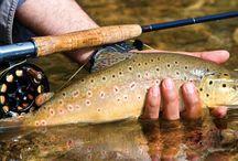 Fly Fishing WNC