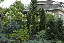display of landscaping evergreens