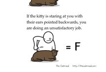 Learn cats