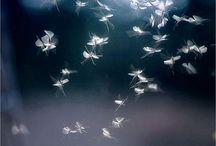 Fairies / Make a wish