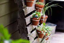 Garden / Proiect