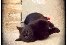 Cats / Miciuu
