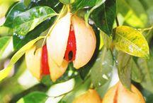 006.   F02.   Fruit