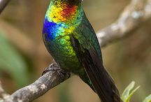 Amazingly Beautiful Birds
