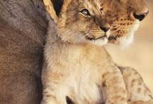 animales maravillosos