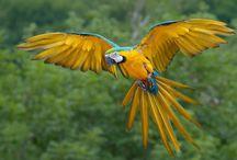 kleurrijke dieren