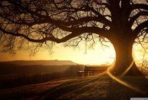 Paysages  /  arbres