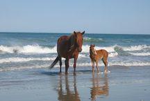 My little Pony / by Brenda Accornero