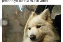 Funny Memes