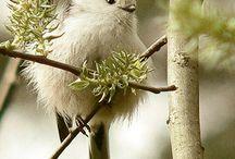 Vögel sind cool!!!