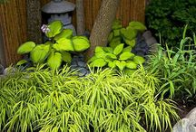 Japanense Garden inspiration