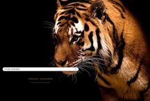 Tygryss :3