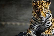 Animals....<3 / állatok